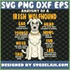 Anatomy Of A Irish Wolfhound SVG PNG DXF EPS 1